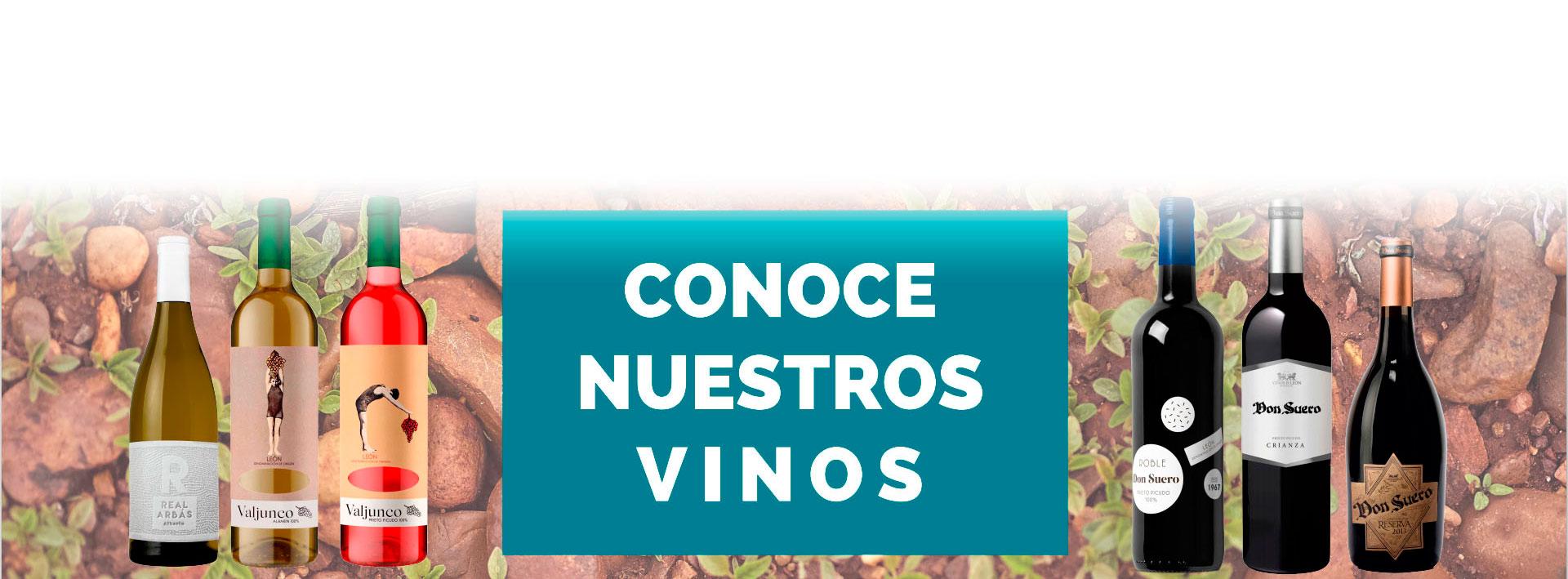 cabecera vinos